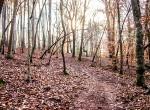 walking trail 4
